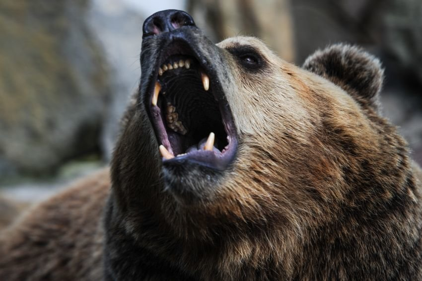 На Камчатке застрелили забредшего к кафе медведя