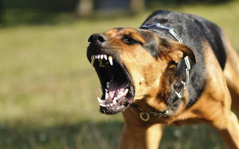 У собаки изНовозыбковского района подтвердили бешенство