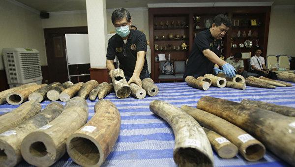 В Испании изъяли партию слоновьих бивней на 200 тысяч евро