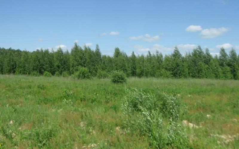 Под Почепом обнаружили 520 гектаров погибающих земель