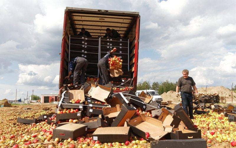 В Брянской области подбульдозер бросили более 20 тонн польских яблок
