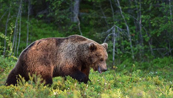 В Японии с конца мая четыре человека погибли из-за нападений медведей