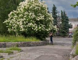 Что из зеленых насаждений не пострадает при ремонте Набережной?