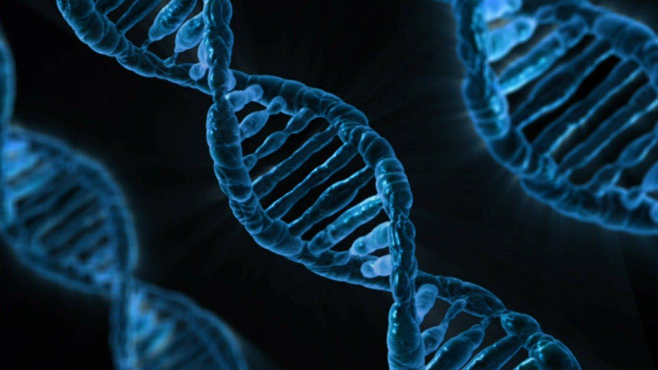 Ученые выяснили, зачем нужна «мусорная» ДНК