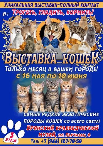 Контактная Выставка кошек