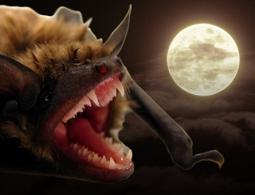 Вампиры вокруг: какие животные питаются кровью