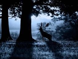 Из-за людей многие животные начали жить по ночам