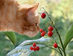 Самые ядовитые лесные растения: когда капля фитотоксина убивает кошку