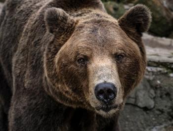 ФСБ предложила признать медведей стратегически важным ресурсом