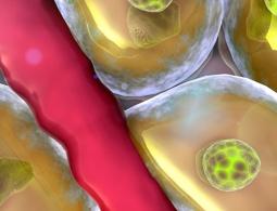 Ученые измерили скорость смерти клеток