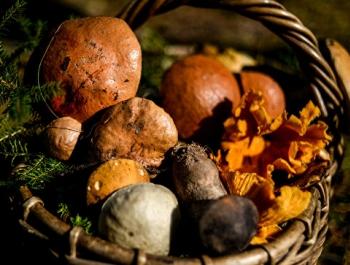 Роспотребнадзор дал рекомендации по сбору, покупке и хранению грибов