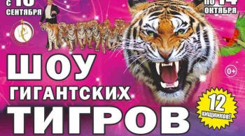 ЦИРК | Королевские тигры Суматры