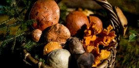 Сдай грибы — купи машину. Госдума вернет россиянам заготовительные конторы