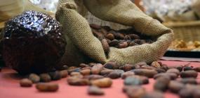 Ученые обнаружили пользу какао