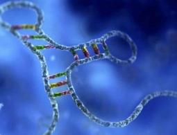 РНК оказалась гораздо важнее, чем мы думали