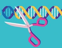 Новая модификация CRISPR сможет отредактировать до 50 процентов генома
