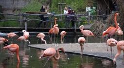 В Чехии хотят запретить диких животных в цирках
