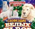 Цирк | Белые львы Африки
