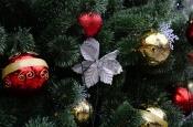 Роскачество рассказало, как выбрать новогоднюю ель