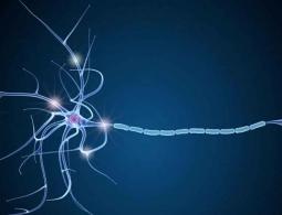 Российские ученые разработали новый более точный метод МРТ головного мозга