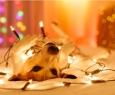 В Новый год без стресса: 7 правил подготовки к празднику