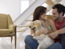 Как привлечь энергию любви и счастья в год Собаки?