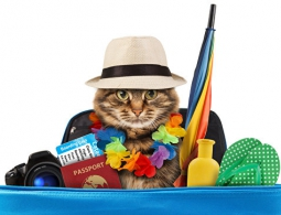 Как избежать проблем в поездках с животными