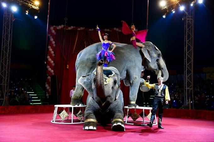 Купить билет в цирк ростова на дону кино афиша остров
