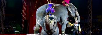 ЦИРК | Шоу Индийских Слонов