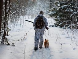 Ружье на гвоздь. Почему браконьерам стало невыгодно охотиться в России