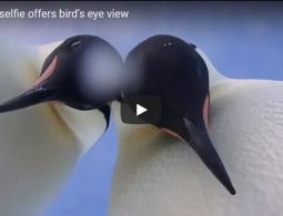 В Антарктиде пингвины провели мастер-класс по селфи