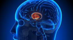 Ученые выяснили, что происходит в мозге во время сна