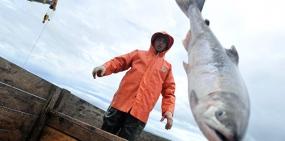 Роспотребнадзор предложил установить норму содержания ртути в рыбе